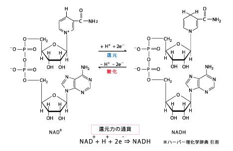 NAD+検査 | 一般社団法人国際水素規格協会